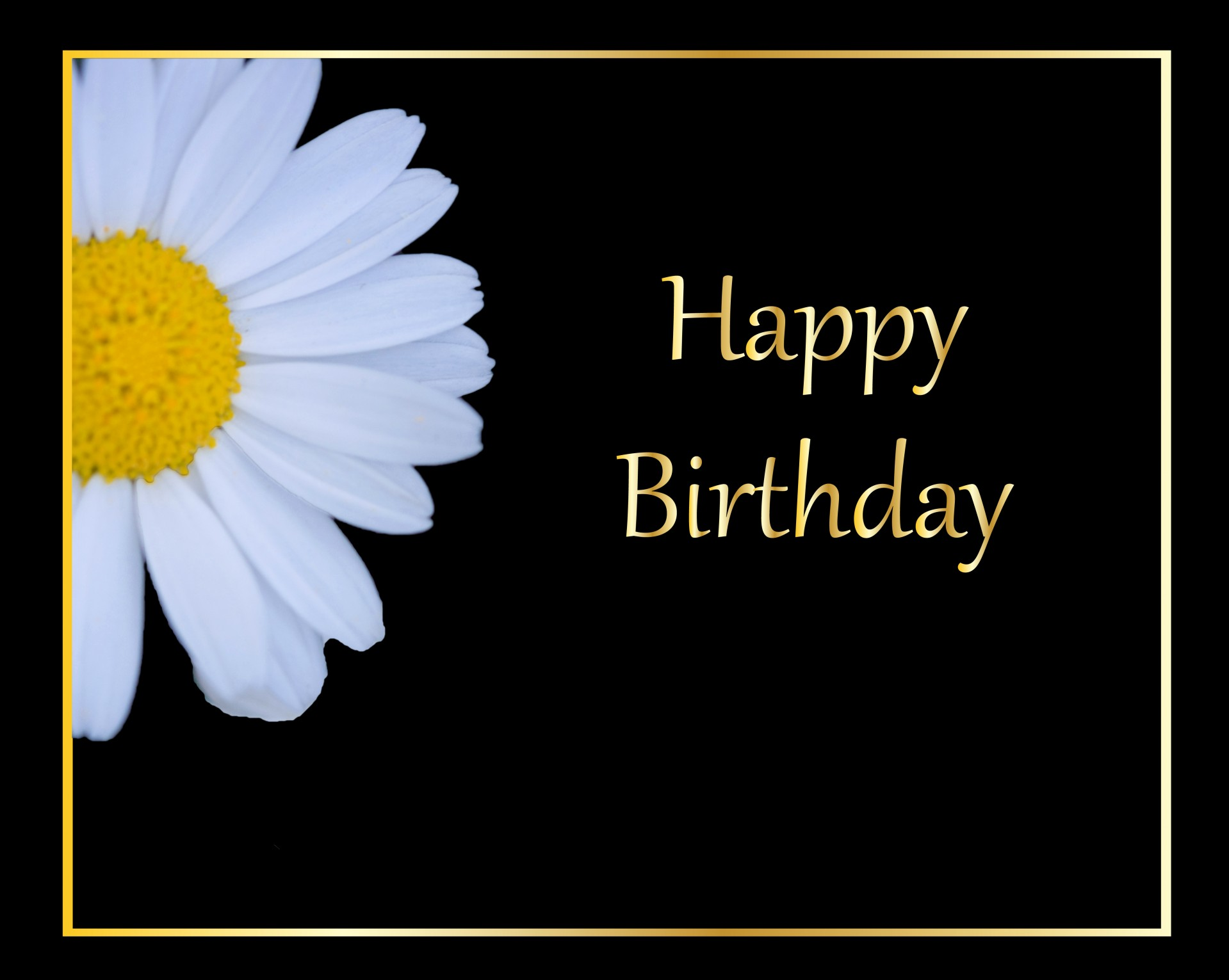 Daisy Flower Birthday Card Free Stock Photo Public