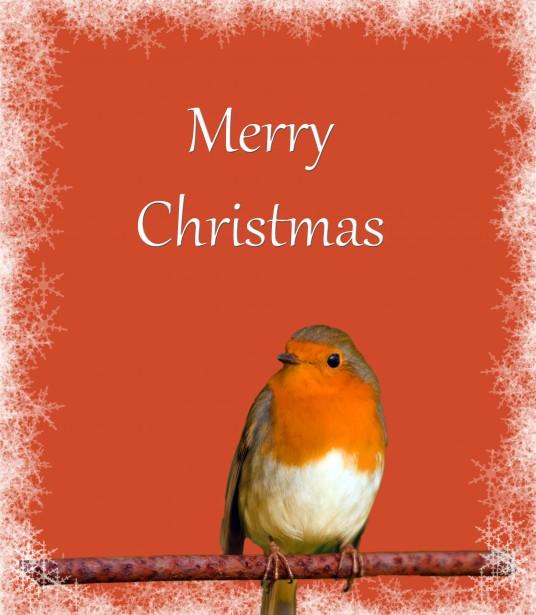 Christmas Card Robin Snowflakes Free Stock Photo Public