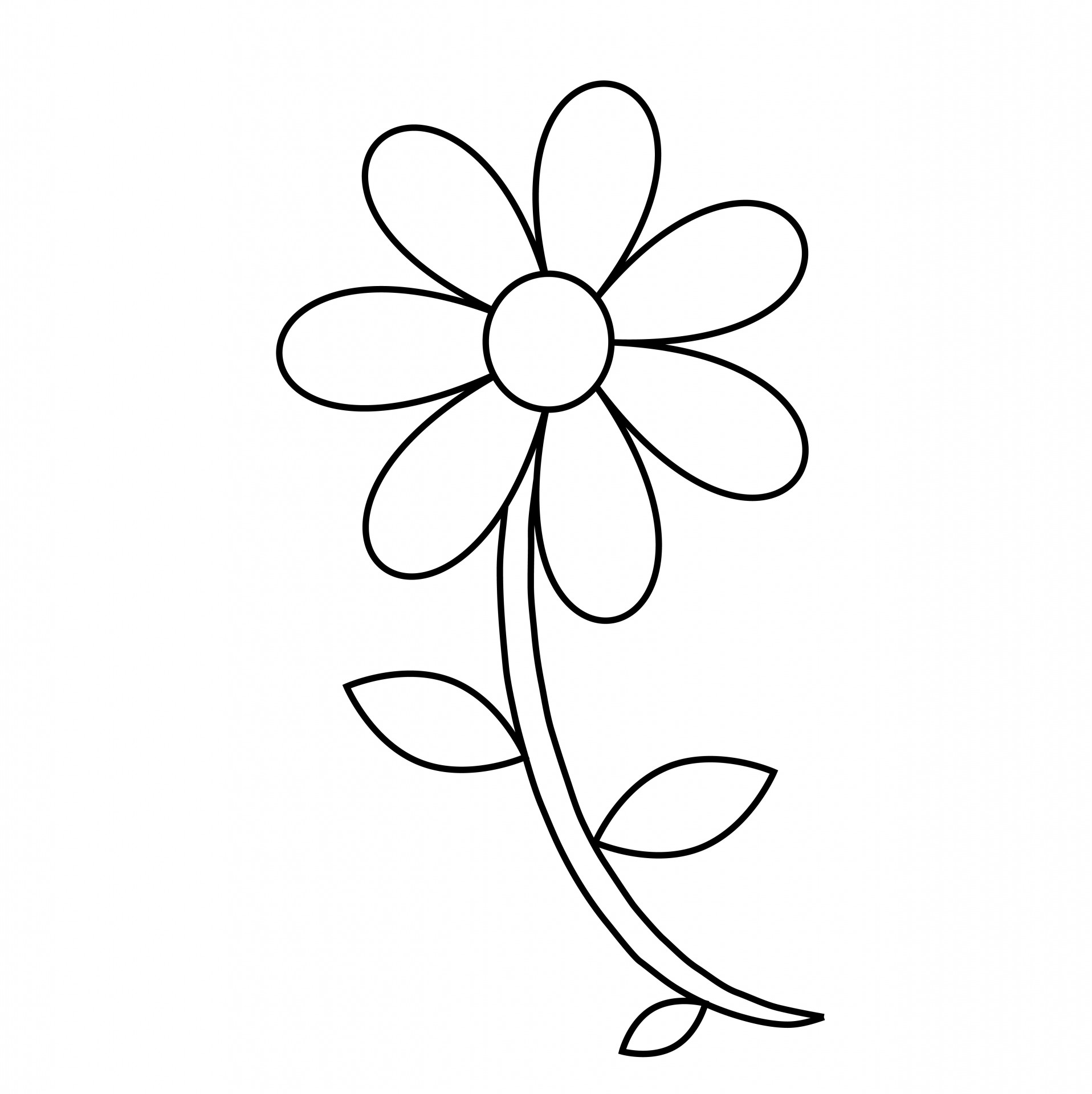 Flower Outline Coloring Page Free Stock Photo