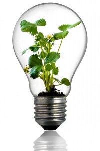 Green Plant In The Light Bulb Free Stock Photo - Public ...