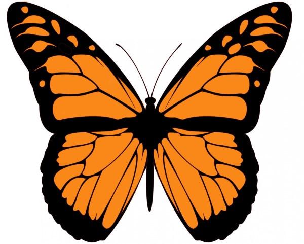 monarch butterfly free stock