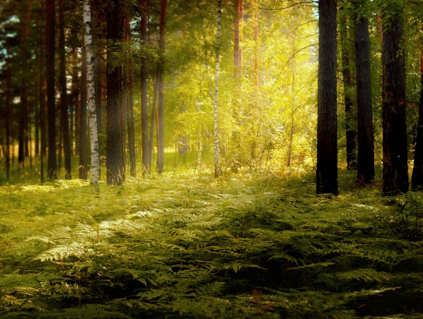 Fall Wallpaper 4d In The Forest Free Stock Photo Public Domain Pictures