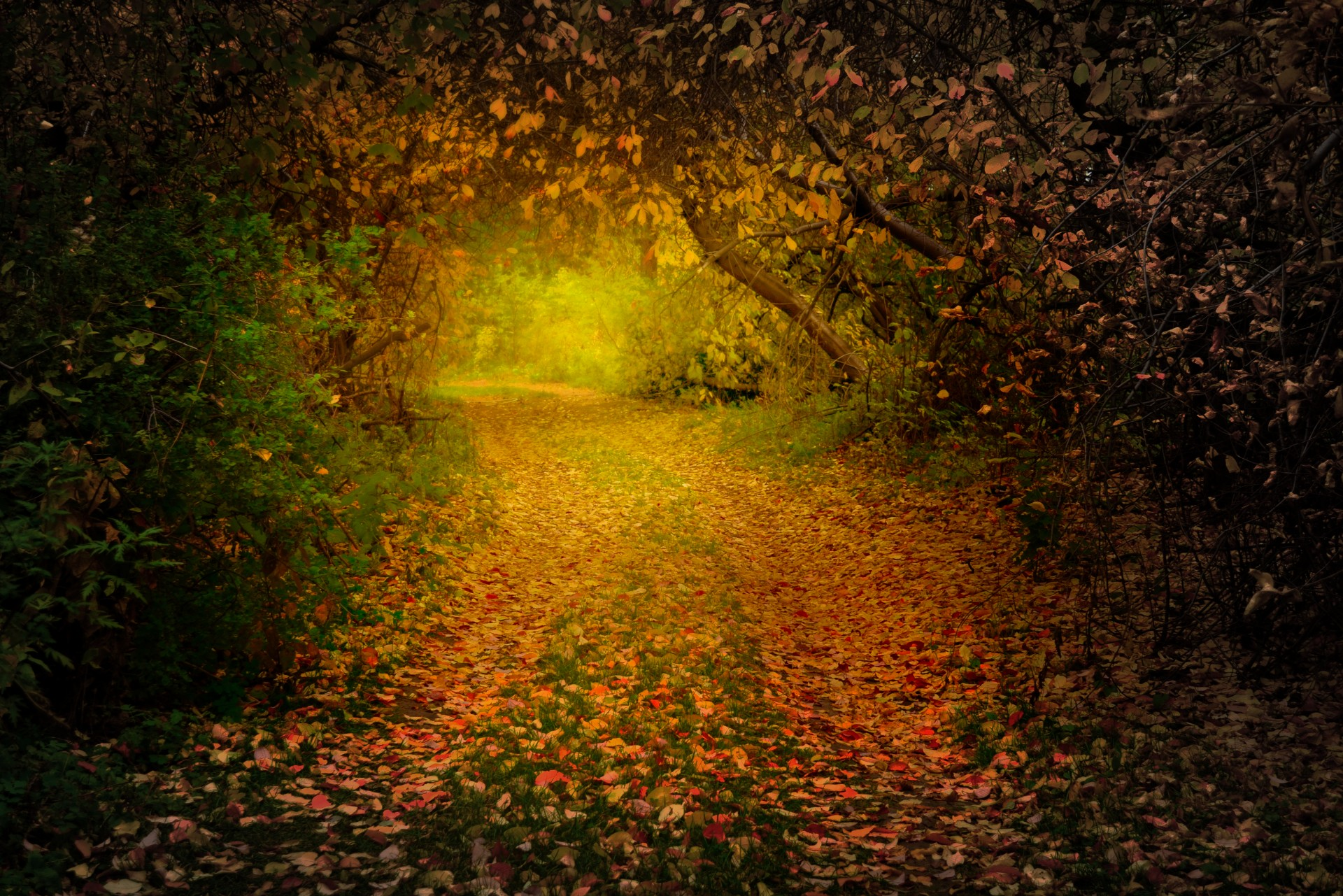 Wallpaper Images Of Fall Autumn Forest Free Stock Photo Public Domain Pictures