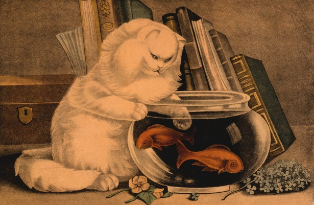 Cat And Goldfish Free Stock Photo Public Domain Pictures