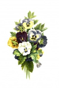 Flowers, Pansies Painting Free Stock Photo - Public Domain ...