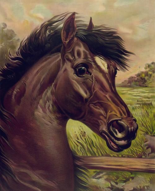 Vintage Horse Painting Free Stock Photo  Public Domain