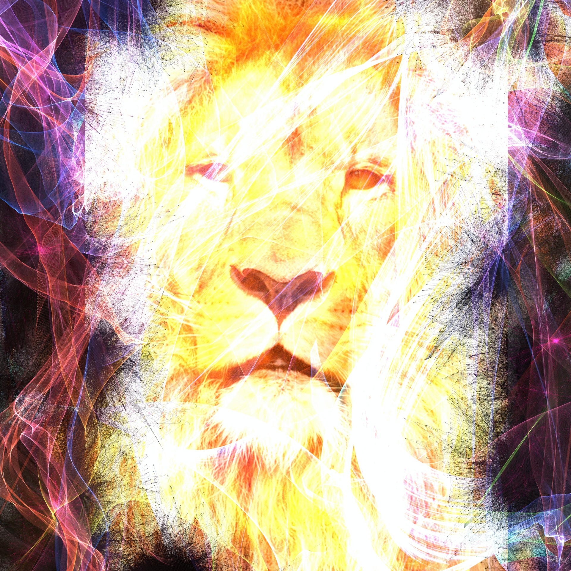 Abstract Animal Wallpaper Abstract Lion Free Stock Photo Public Domain Pictures