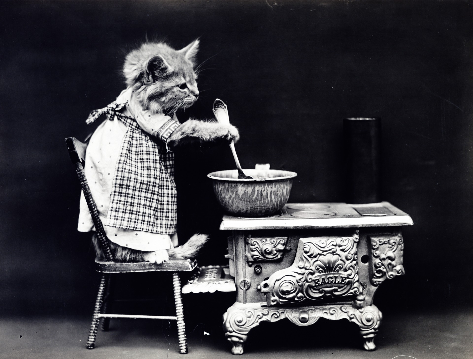 Cat Dressed Vintage Photo Free Stock Photo Public Domain