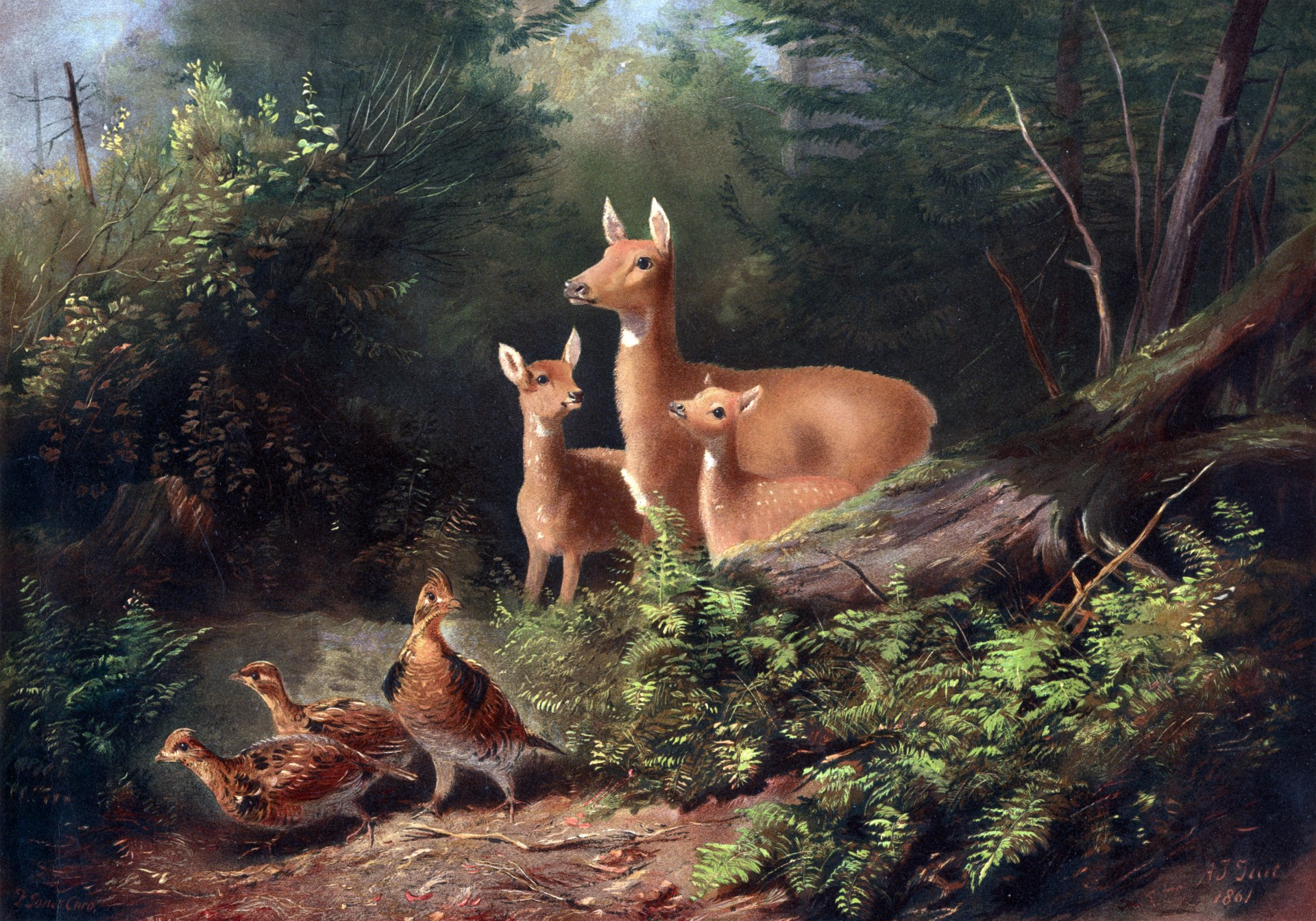 Fall Wallpaper With Deer Deer In Woods Painting Free Stock Photo Public Domain