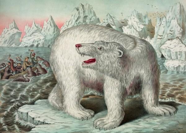 Vintage Polar Bear Illustration Free Stock - Public