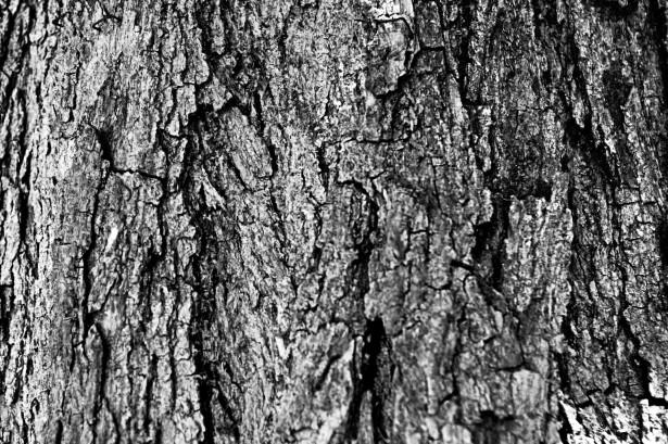 free tree design