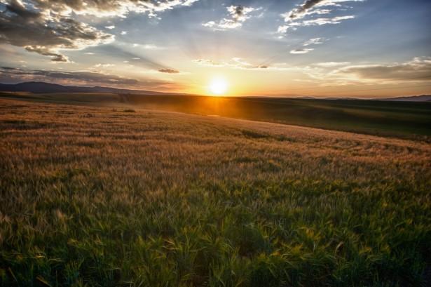 Shutterstock Hd Wallpapers Sun Rays Over Field Of Grain Free Stock Photo Public