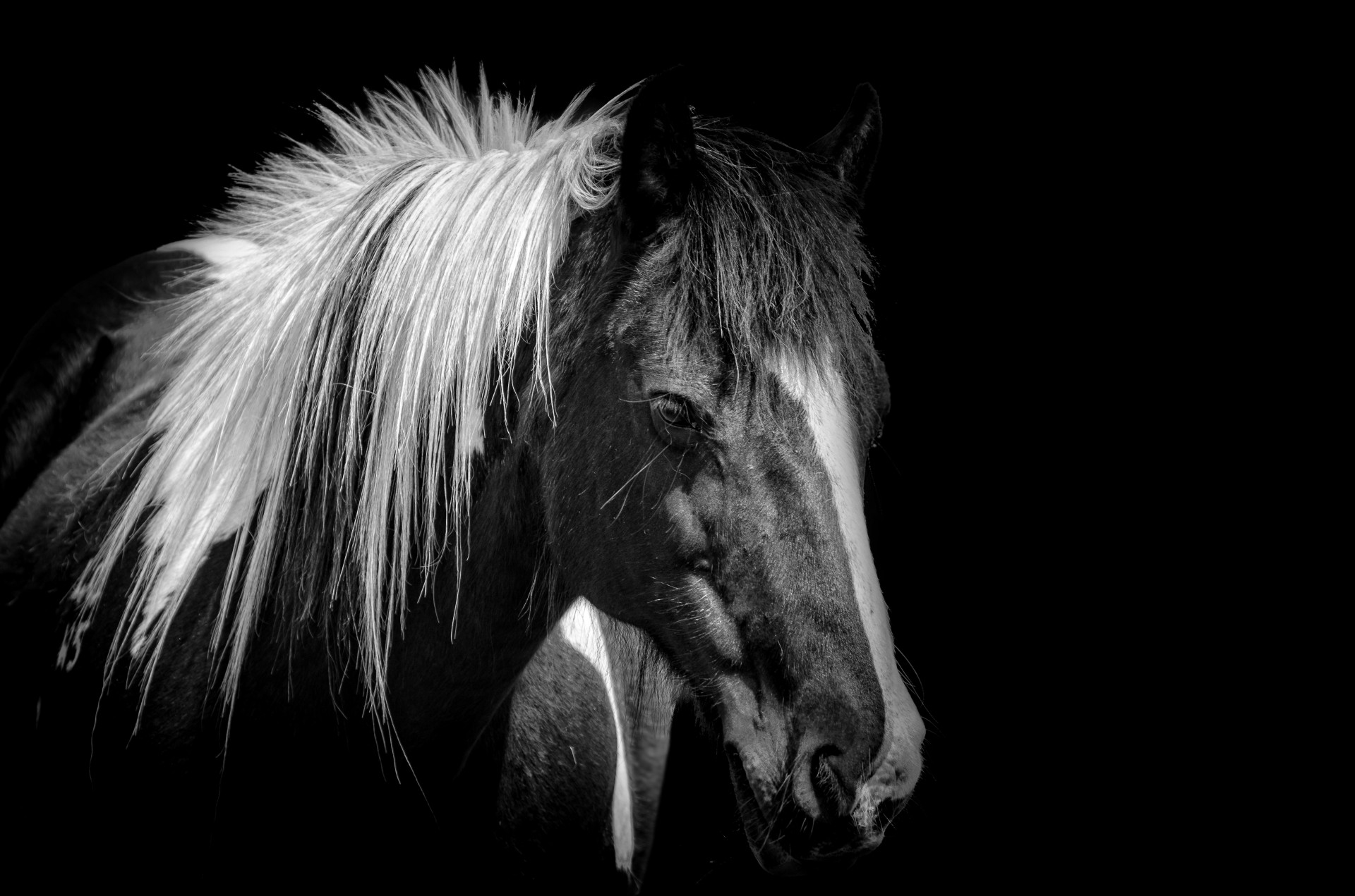 Beautiful Animal Pictures Wallpaper Horse Free Stock Photo Public Domain Pictures