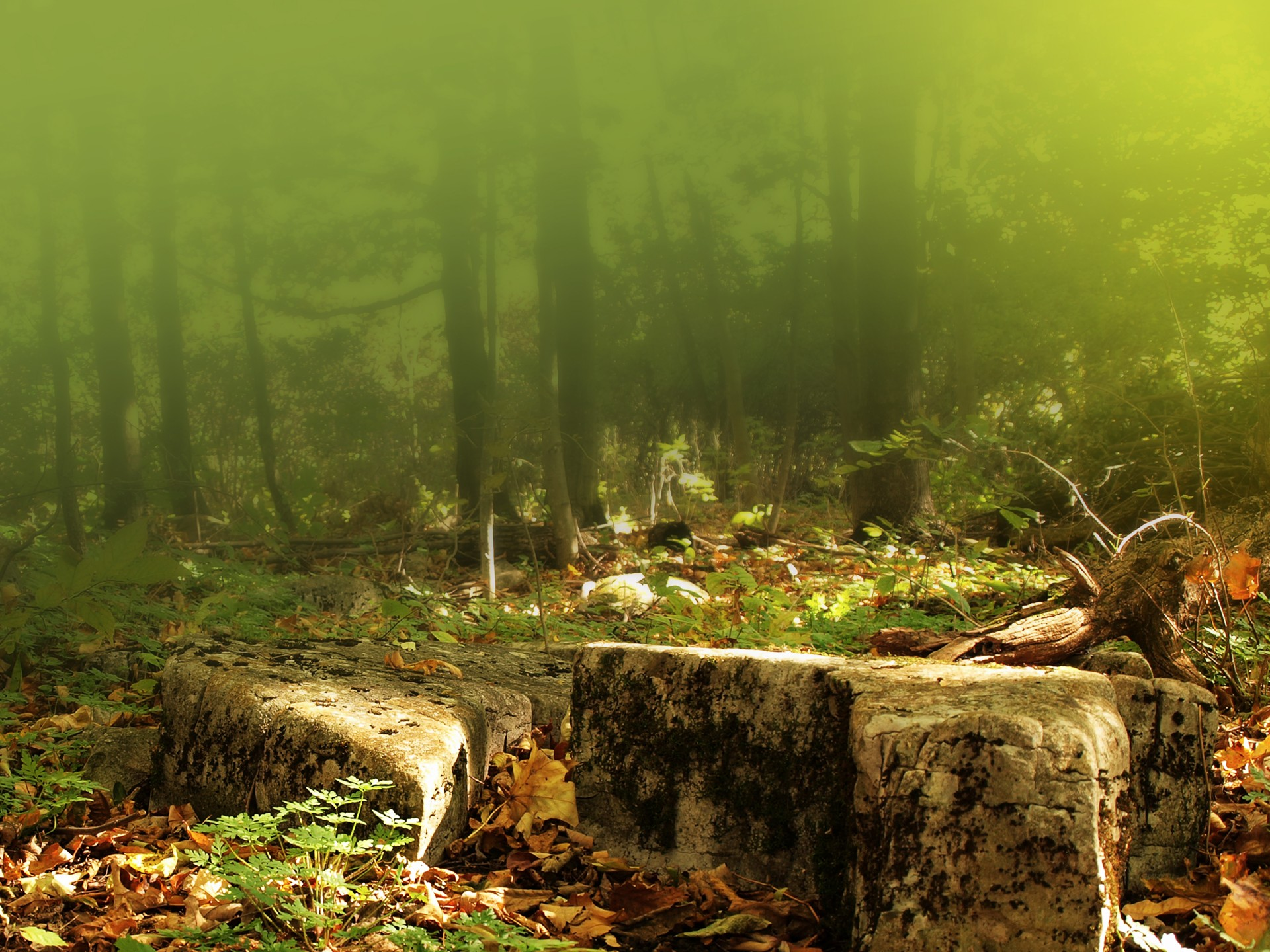 Leaves Wallpaper Fall Rocky Ground In Woods Free Stock Photo Public Domain