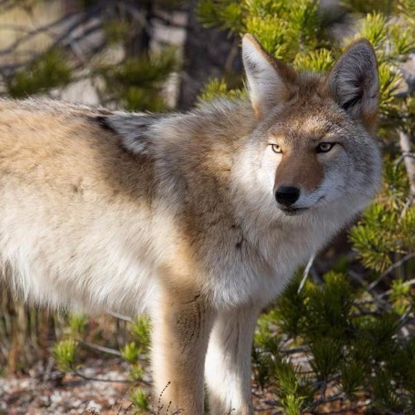 wild animals public health