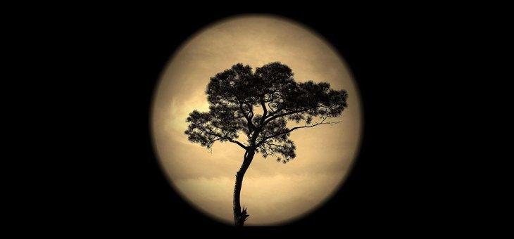 Salem Moon Tree
