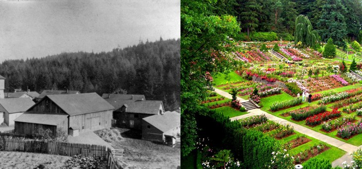 From Poor Farm to Global Attraction: The History of Portland's International Rose Test Garden