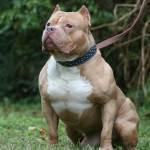 Cada Día Se Presentan Trece Ataques Caninos En Cali