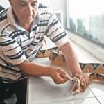 Colombianos buscan antídoto contra veneno de serpientes coral