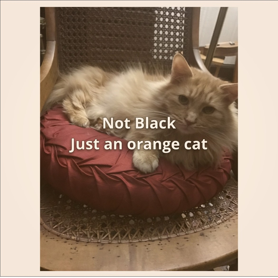 Another faker, this time just an orange cat