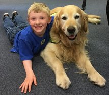 Since this picture was taken in Lough Library, the boy has persuaded his parents to buy a Labrador puppy.