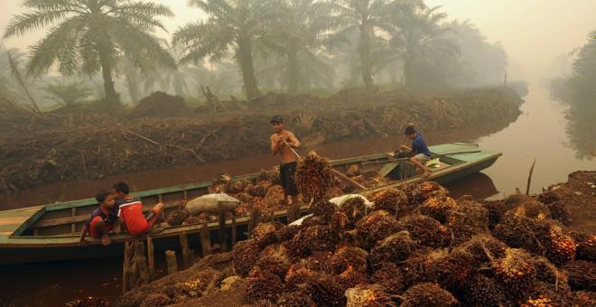 Niños es una plantación de palma en Indonesia. REUTERS