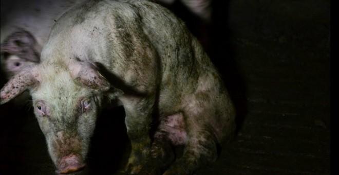 La Guardia Civil detectó 609 delitos de maltrato animal en 2015, más del doble que en 2014. EFE