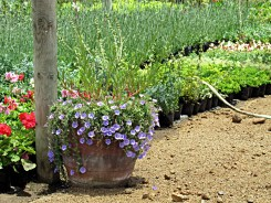 28_jardinesMaitencillo