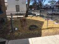 Dog pen in front with new straw