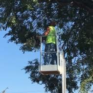 Jimmy Workman volunteers to help trim trees
