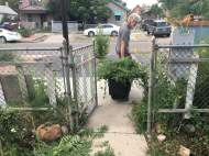 Jimi hauls off one load of weeds