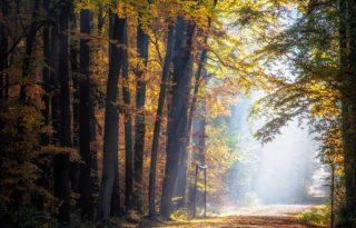 Herbst im Erfurter Steigerwald