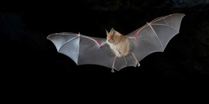 Fledermäuse – Geheimnisvolle Jäger der Nacht: Sonderausstellung mit Fotos von Dr. Christoph Franz Robiller im Naturkundemuseum