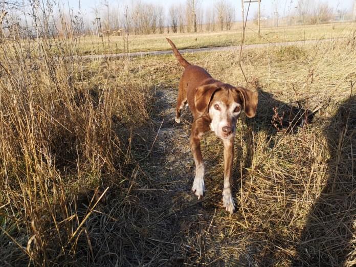 Tierheimtipp: Hilfe! Herrenloser Hund! Was jetzt?
