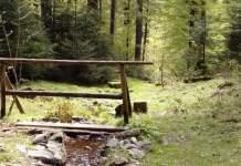Waldbaden – was steckt wirklich hinter dem Wellnesstrend?