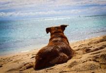 Ab in den Urlaub – Auf Reisen mit dem Vierbeiner