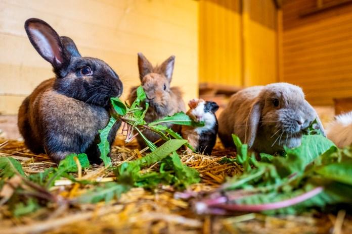 Ziege, Meerschweinchen & Co. –  Kinderbauernhof egapark