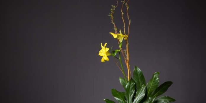 Ikebana – Japanische Blumenkunst