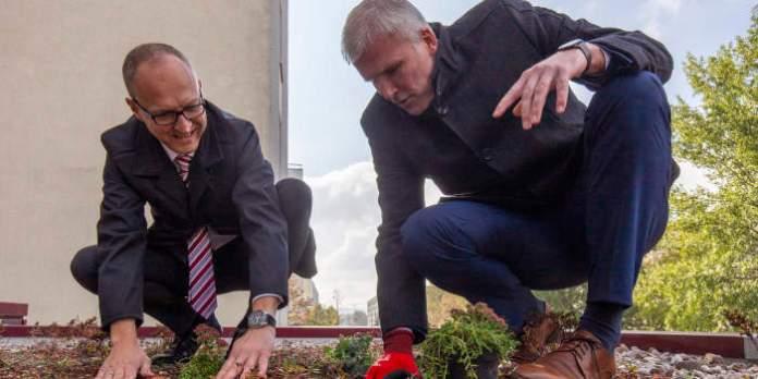 Zwei Männer pflanzen kleine Pflänzchen