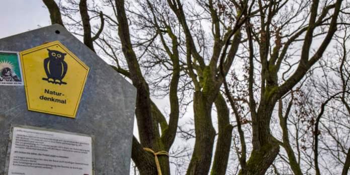 Schild vor Baum