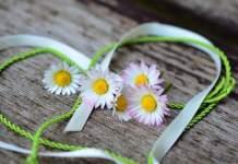 Gänseblümchen in Herz