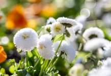 weiße Blumen in einem Blumenbeet