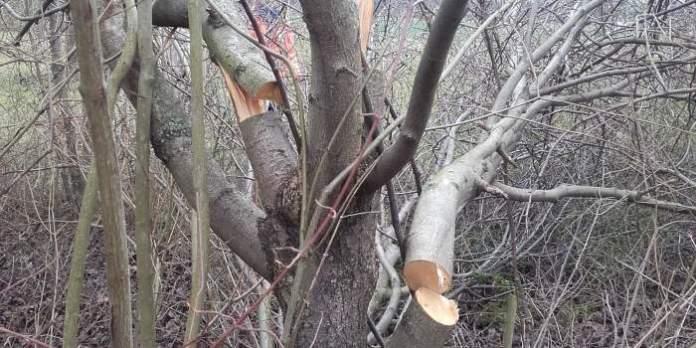 ein Baum mit mehreren abgesägten Ästen