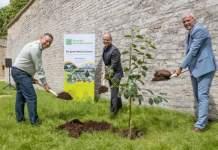 drei Männer pflanzen einen Baum und halten Spaten in der Hand