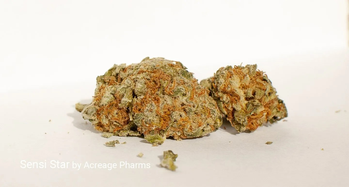 Sensi Star grown by Acreage Pharms