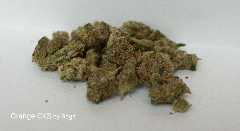 16.8% THC
