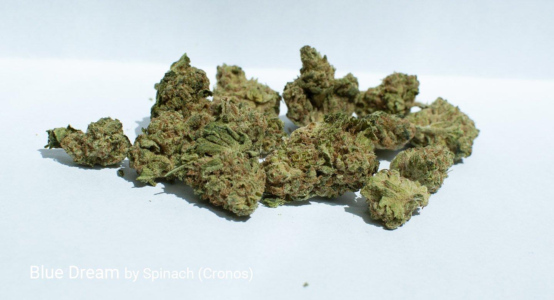 20.9% THC Blue Dream by Spinach (Cronos)