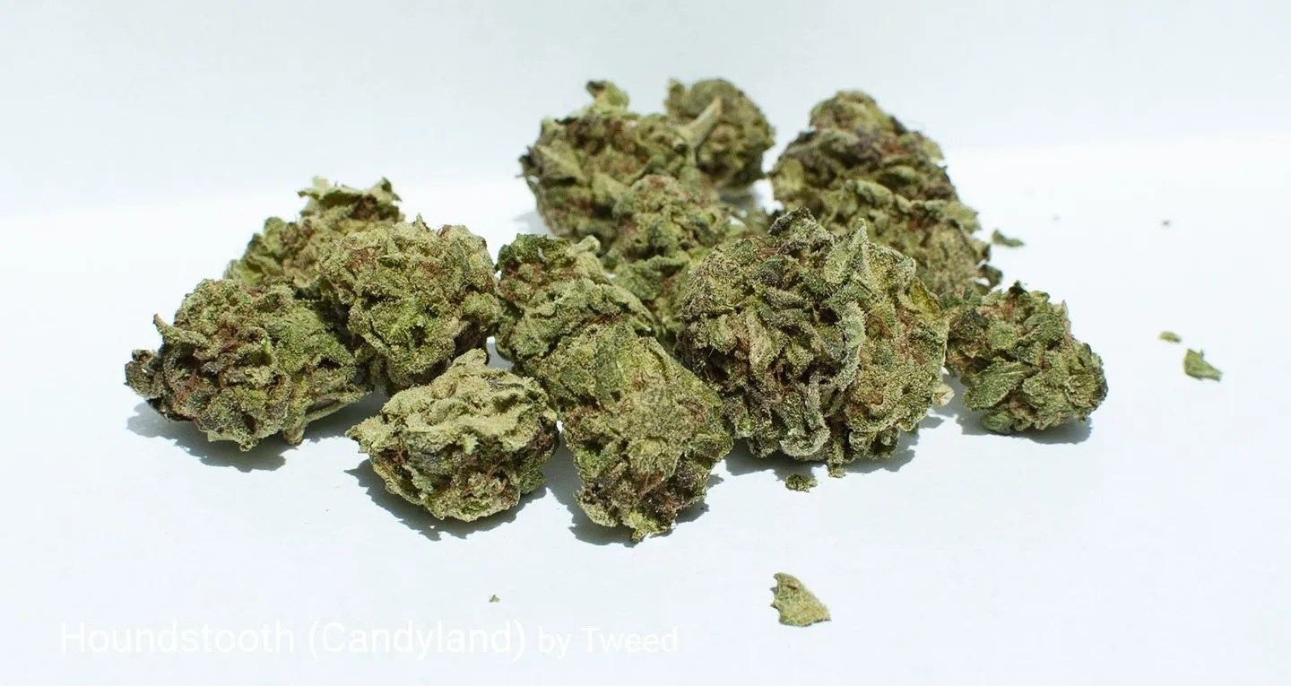 22.6% THC Houndstooth aka Candyland by Tweed