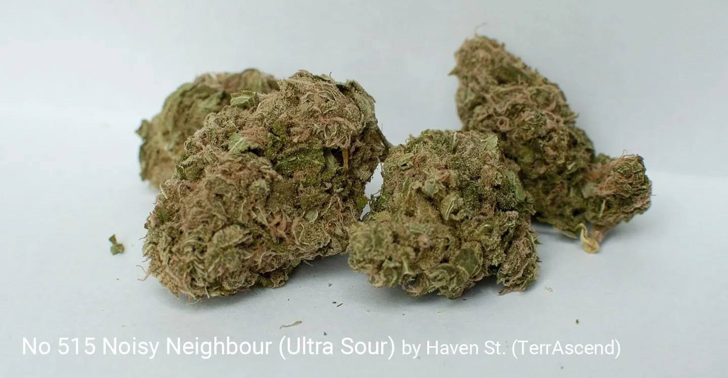 22.36% THC Noisy Neighbour aka Utra Sour by Haven St. (TerrAscend)