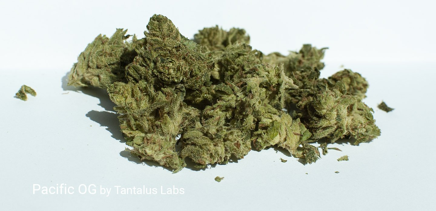 24.7% THC Pacific OG by Tantalus Labs